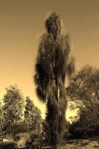 IMG 9621 - Spirit Trees