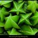 Star Fruit by Ahmad Faiz Mustafa