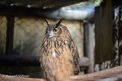 Owl at World of Birds