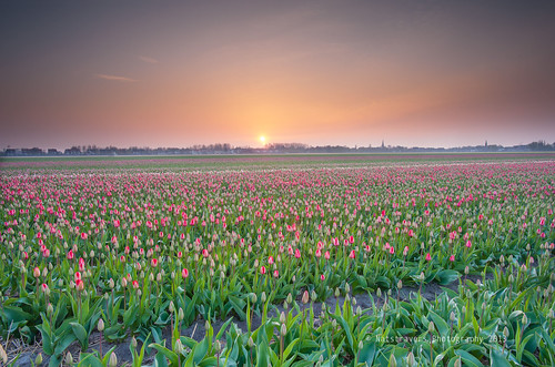 sunrise at Lisse 3 May 2013 by Nathalie Stravers