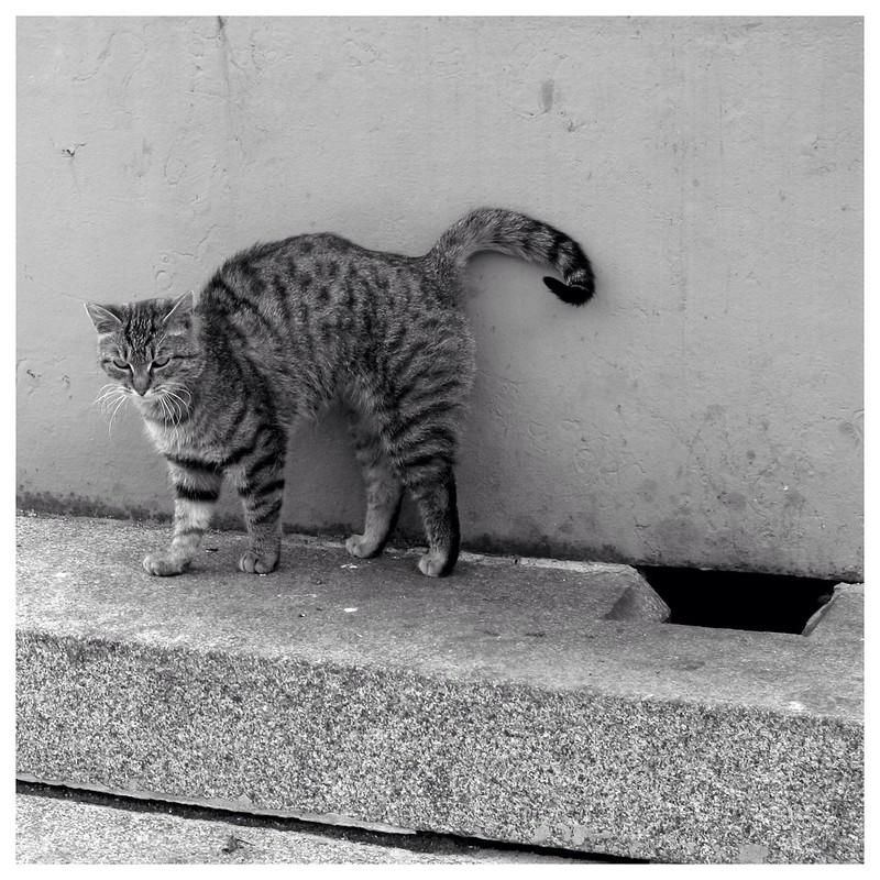 Кот из Часовни. (Фигура третья. Прощальная)