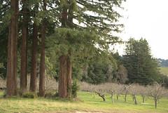 big tree, small tree