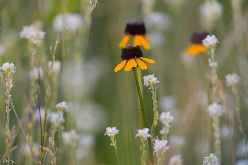 Flowers-47118.jpg