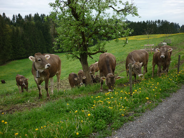 germany2010_22