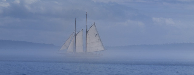 Adventuress Fogsail