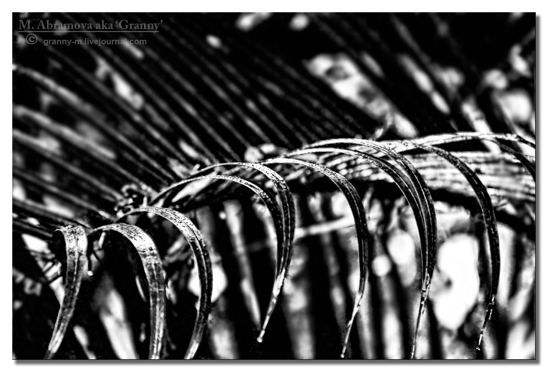 Rain  2012_02_1_7297_1