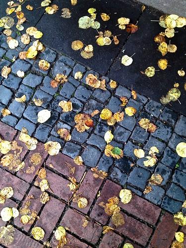 Tricolor fall