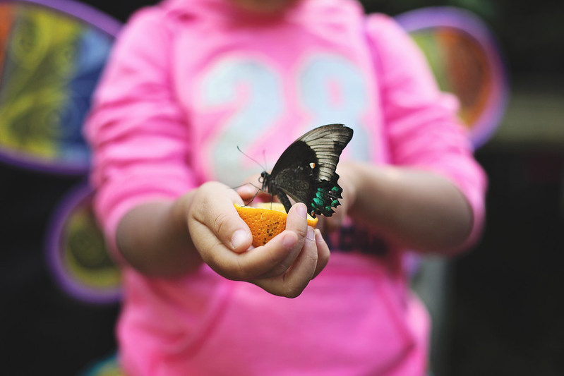 butterfly show @ carleton