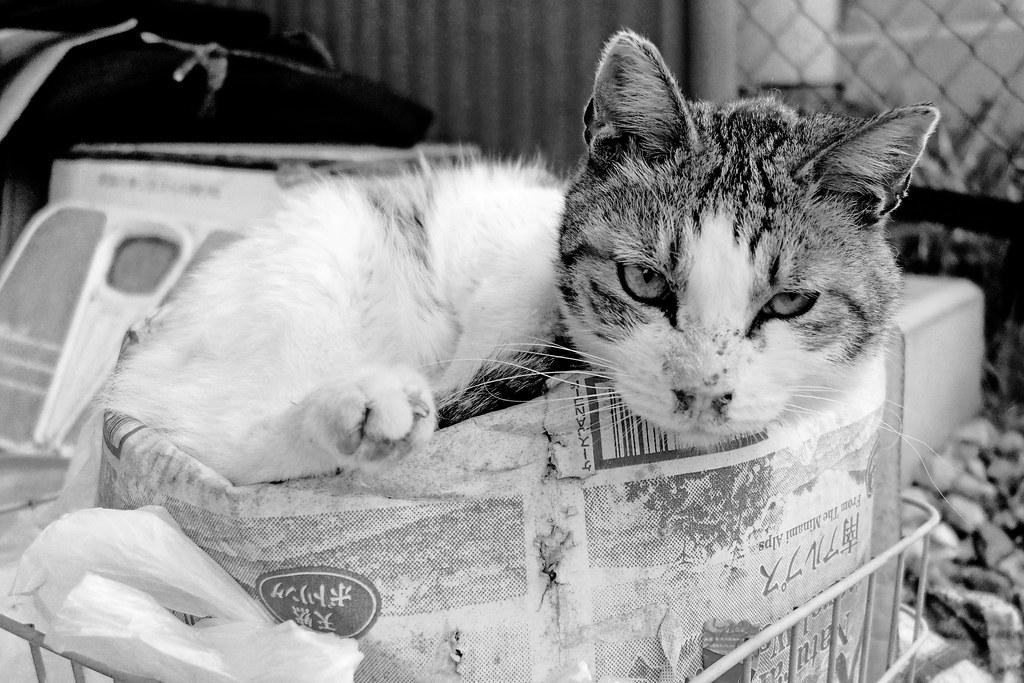 Stray Cat Life : ノラ猫的生活