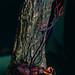 Weevil (Curculionidae) killed by Fungus (Ophiocordyceps curculionum) ©berniedup