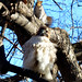 Red tail and squirrel in Tompkins Square by Goggla