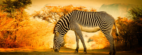 california africa trees mountains beautiful animal animals plane canon landscape stripes wildlife creature 6d zerba