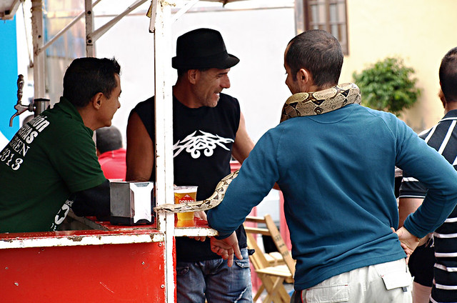 Snake at San Abad, Buenavista del Norte, Tenerife