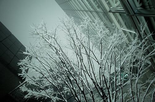 snowstorm at Yurakucho 04