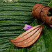 Still life with petal