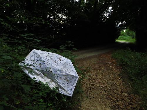 20130819 11 030 Jakobus Wald Weg Regenschirm