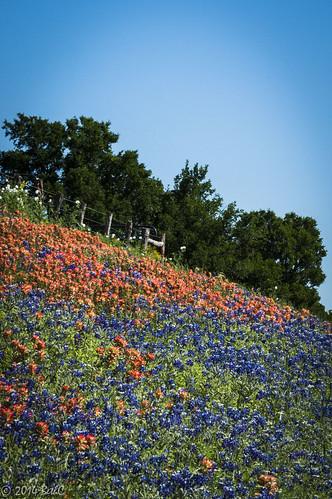 105-365 Texas Wildflower Blanket