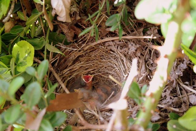 196/365 Baby Birds