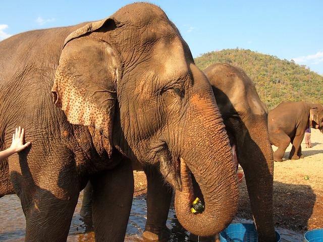 Elephant Nature Park inThailand