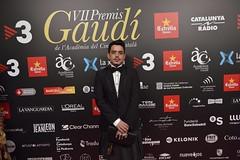 Catifa vermella VII Premis Gaudí (80)