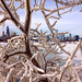 Lakefront Ice and Chicago skyline by Jessica_Dyer