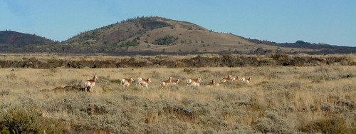 The area between the Pioneer Mountains and Craters of the Moon National Monument encompasses a large expanse of sagebrush ecosystem that is vitally important to sage-grouse and other wildlife. Photo by Pioneers Alliance.