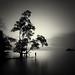 Solitude by Hengki Koentjoro