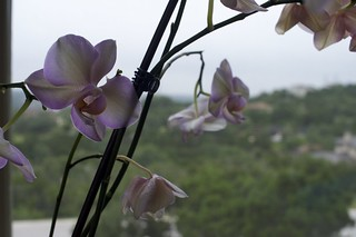 Orchid shot with a D700 and 35mm f/2