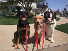 Hazel, Latte & Teddy