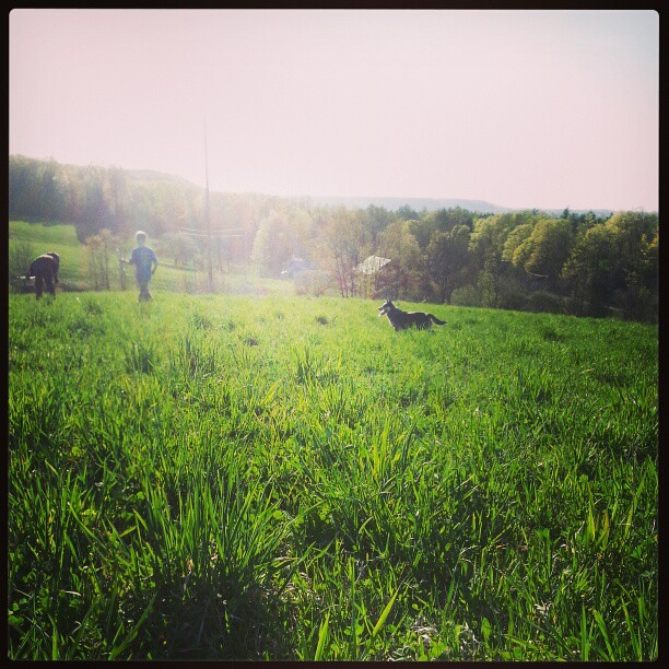 #farm #largefamily #blueheeler