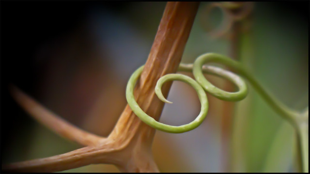 tendril embrace
