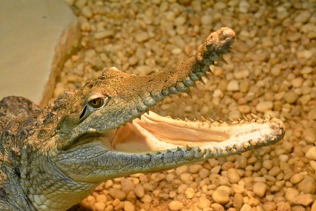 Little Ray's Reptile Zoo: Freshwater Crocodile