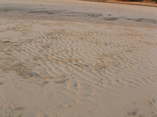201202210344-beach-wormcasts