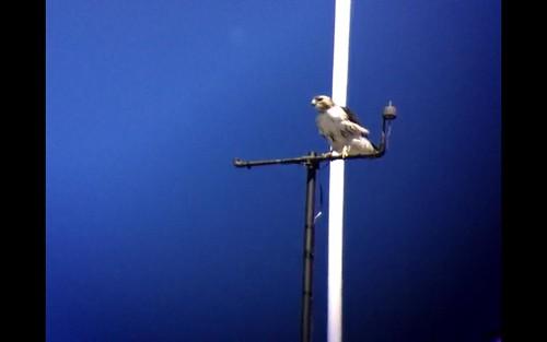 EZ on on bradfield antenna