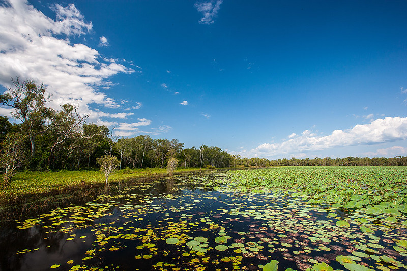 Anggardabal billabong on the Gungarre walk, South Alligator - Photo by Parks Australia