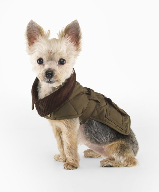 Ralph Lauren Quilted Dog Coat
