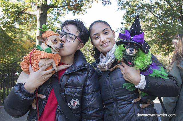 Halloween Dog Costume_Reptar the Pumpkin_Lola the Witch_Chihiuahua