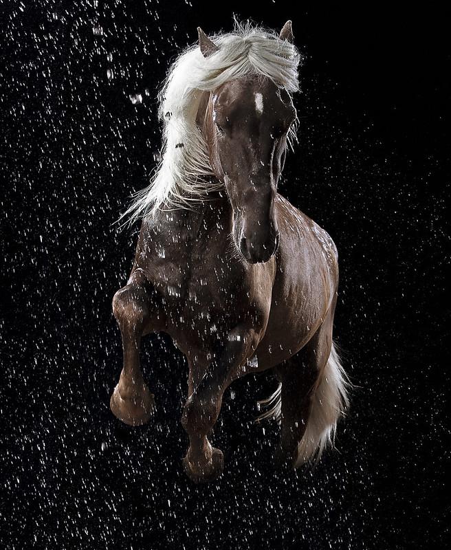 horse_A.P (18)