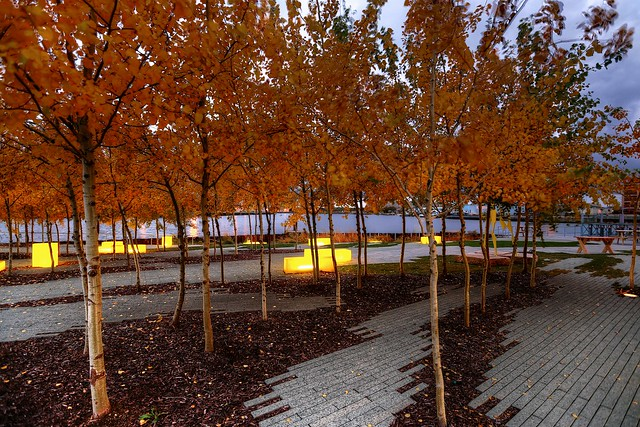Autumn Leaves at Erie Street Plaza