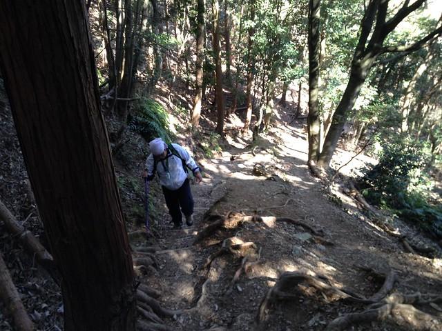 多度山 健脚コース 登山道