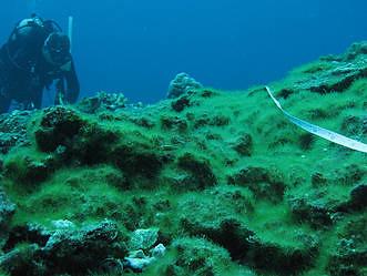 蘭嶼水下的珊瑚礁,遭藻類覆蓋;照片提供:中研院生物多樣性研究中心珊瑚礁演化生態與遺傳研究室