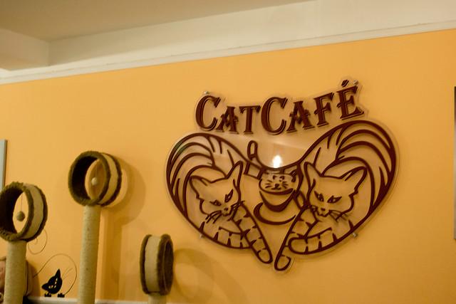 Cat Café Budapest | Budapest, Hungary