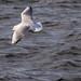 Edg_Res_Birds-9.jpg