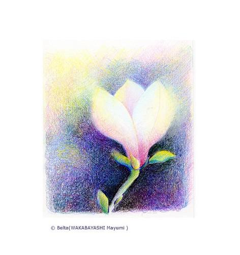 2014_03_26_magnolia_01_s