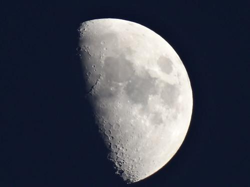 Mond eine eisige Scheibe über blassem Schnee ohne Erbarmen kommt die Vergangenheit der Wölfe zu  uns 0252