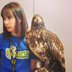 A beautiful Golden Eagle at #25YorkStreet on #earthday2014 #lifestoreys