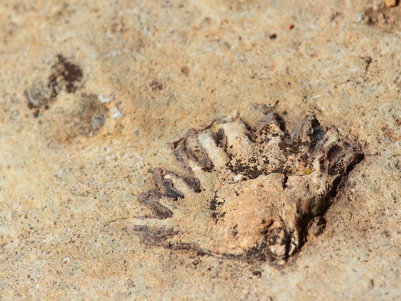 IMG_8330 Ranger Program: Fossil Walk