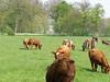 Behind the bovines - Huys ten Donck by Henk van der Eijk