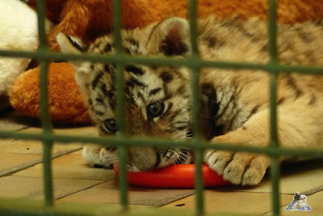 Tierpark Berlin 07.02.2015   167