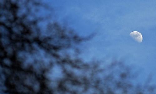 1.28.15 Moondance